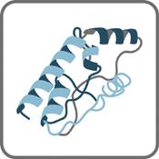 Proteins - Signaling Molecules